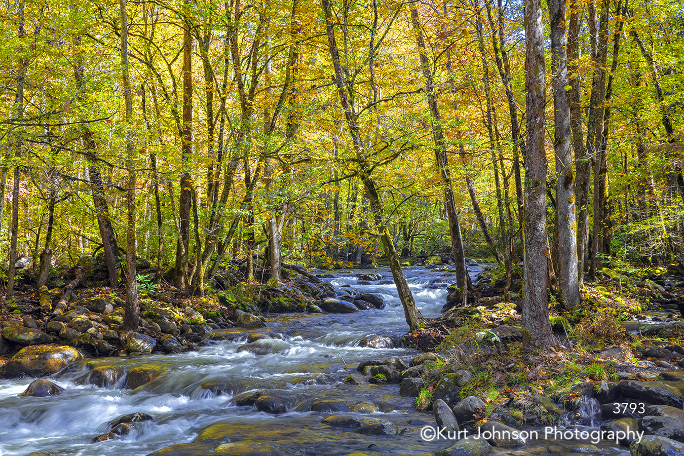 green yellow autumn fall trees river stream water rocks waterscape branches healing healthcare art