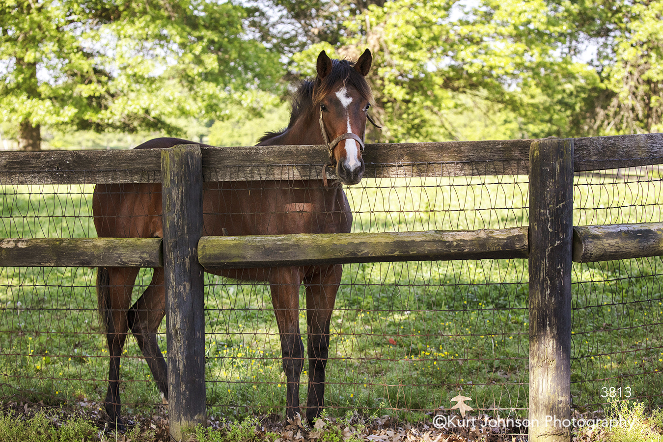 green grass grasses brown horse wood fence animal wildlife horses farm field midwest