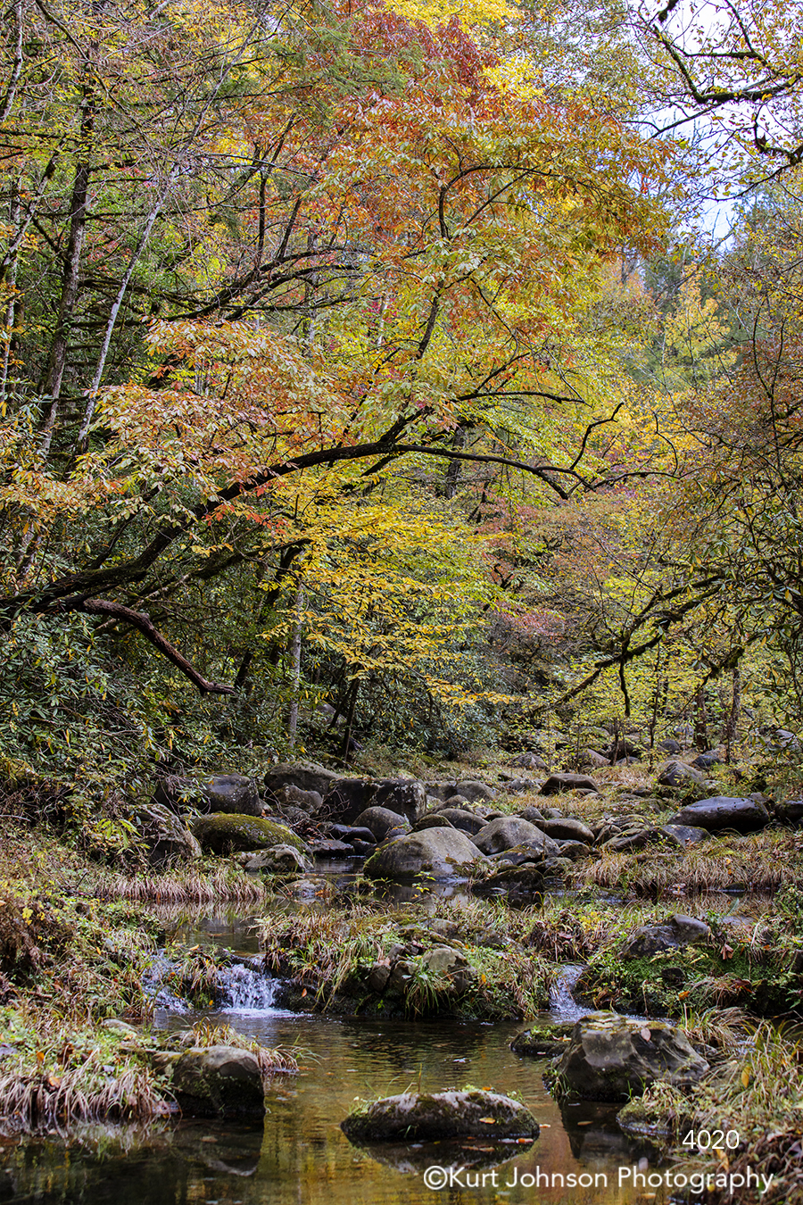 autumn fall leaves forest water waterscape stream river rocks green moss orange yellow trees tree branches