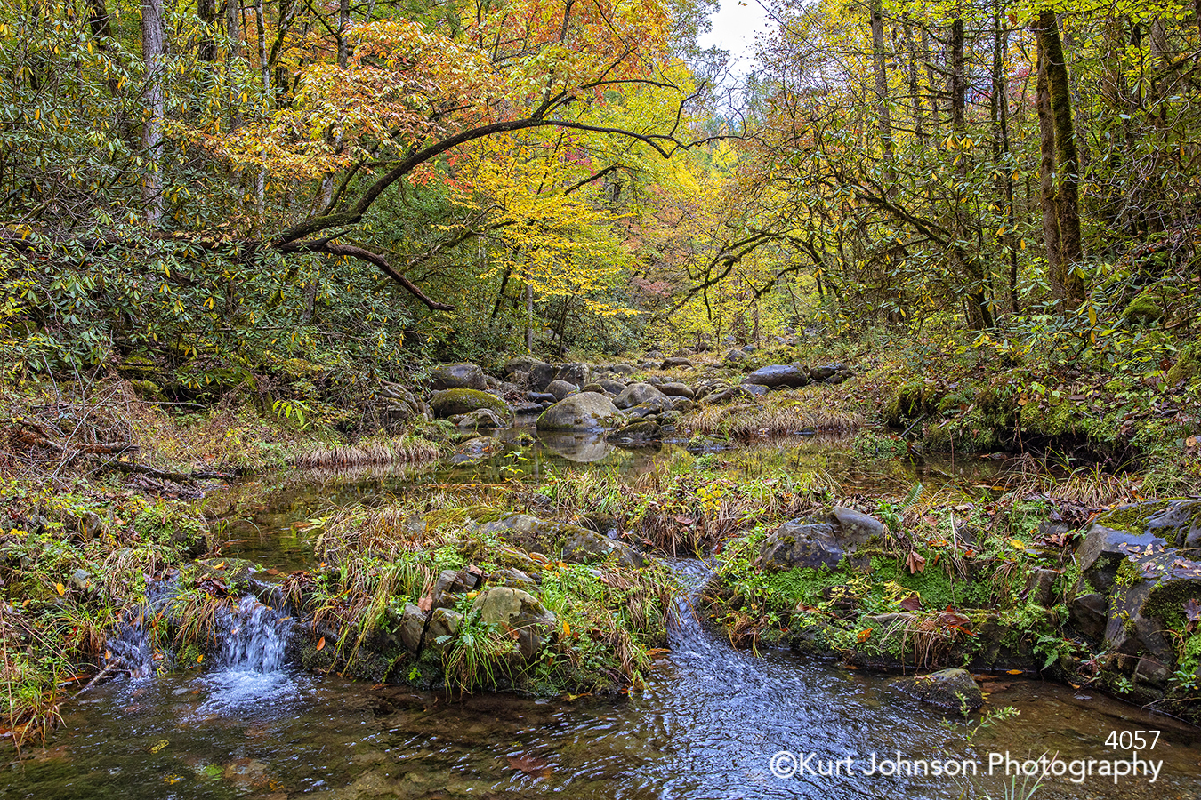 autumn fall yellow orange green trees branches water stream moss river waterscape healthcare wellness design landscape