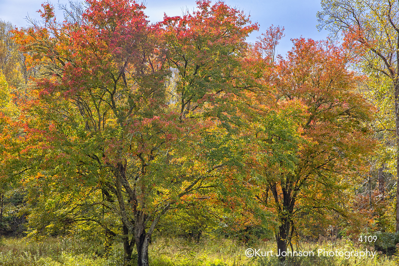 autumn fall trees orange yellow green red forest blue sky tree