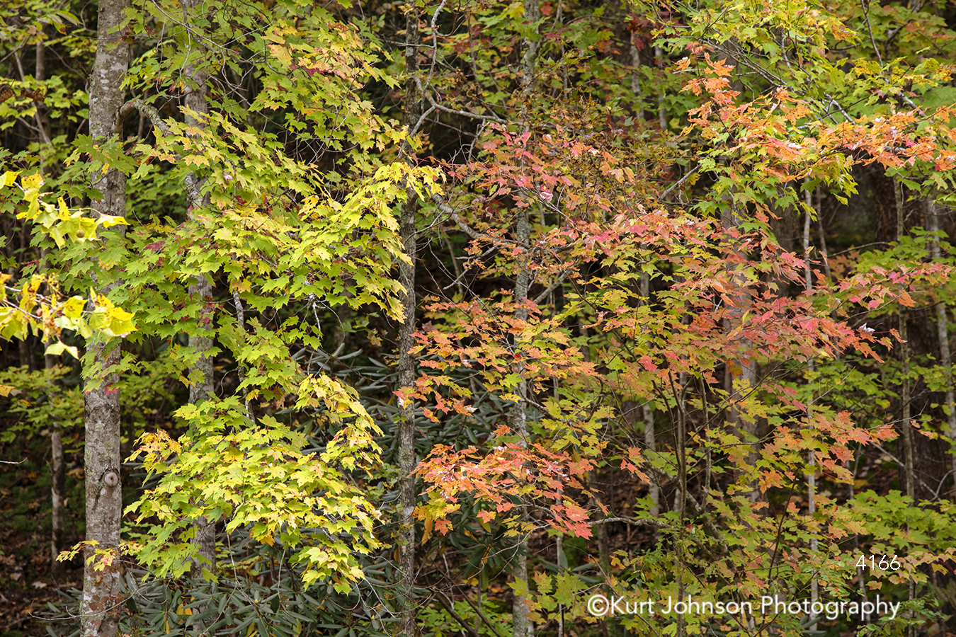 orange yellow green autumn fall tree trees leaves forest