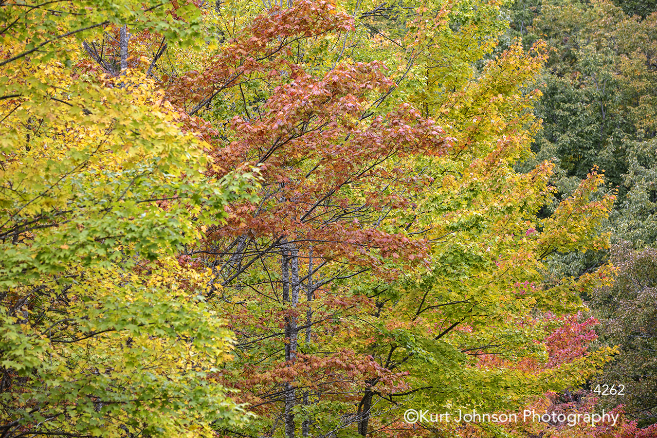 green yellow orange autumn fall tree trees forest leaves