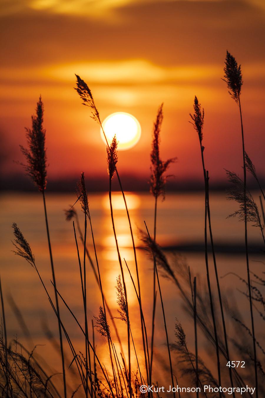 orange sun sunset sunrise shadows silhouette tall grass grasses water river stream reed