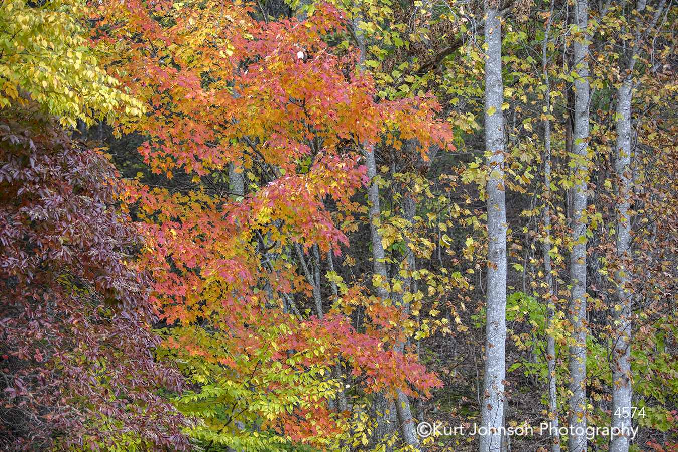 orange red yellow green purple autumn fall leaves tree trees branches forest