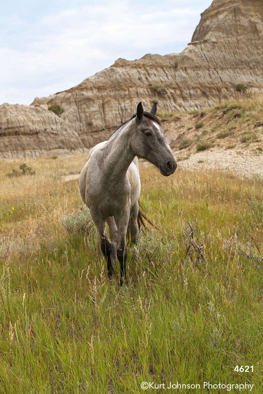 green yellow grass grasses white horse horses wildlife animal nature farm midwest landscape