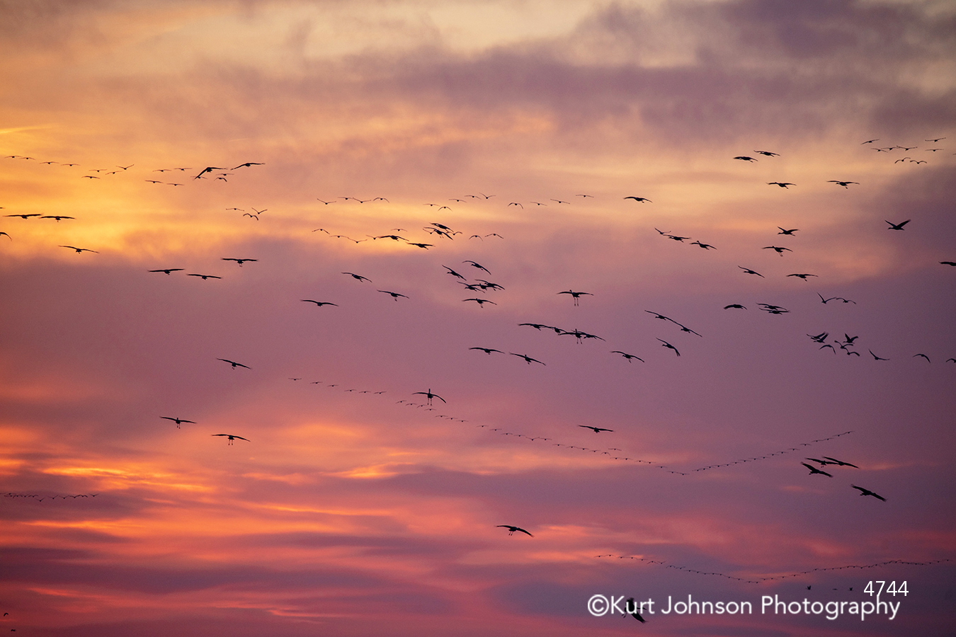 bird birds flying sunset sunrise pink purple sky clouds animals wildlife