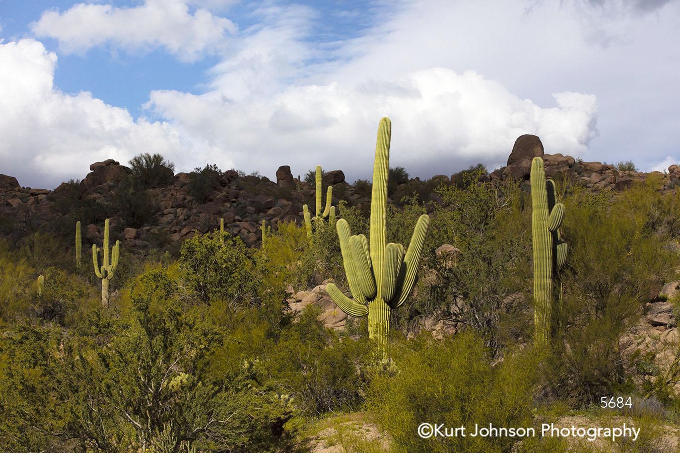 arizona southwest desert landscape cacti cactus green field blue sky clouds indigenous