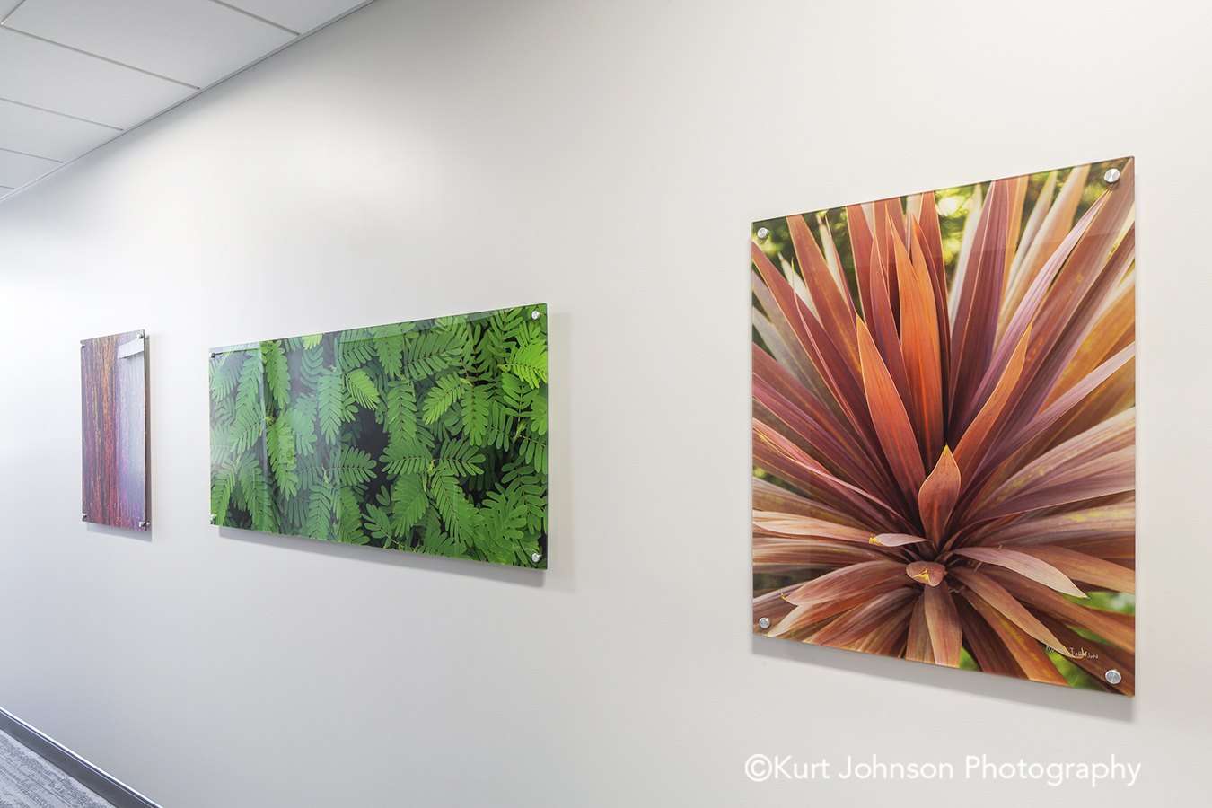 acrylic panel install healthcare installation CHI St Saint Francis Grand Island Nebraska clinic cancer treatment hallway corridor leaves botanical