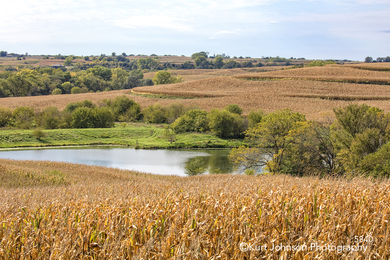 water yellow gold wheat field river stream bushes midwest trees open landscape waterscape