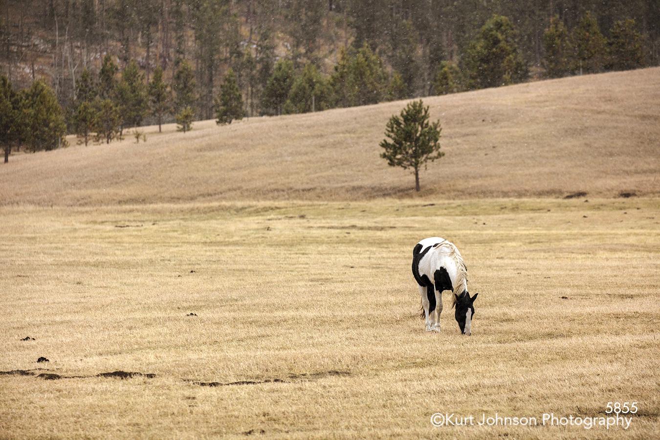 open field farm white black horse grazing farmland country landscape animal wildlife