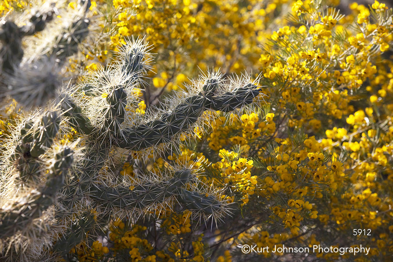 yellow flowers grass grasses desert southwest cacti cactus botanical