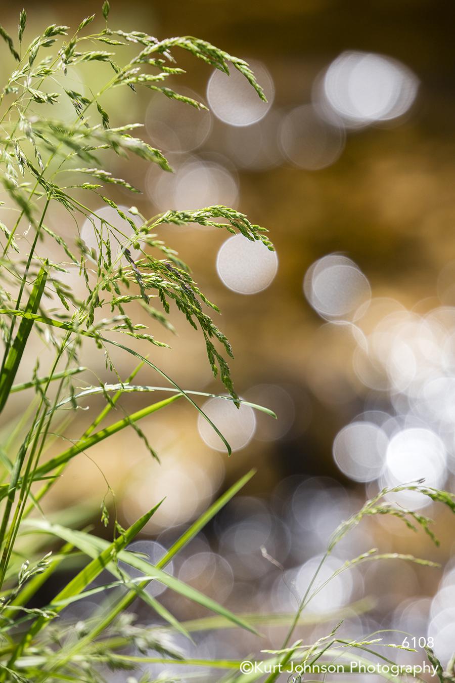 green grass grasses texture pattern bokeh detail up close