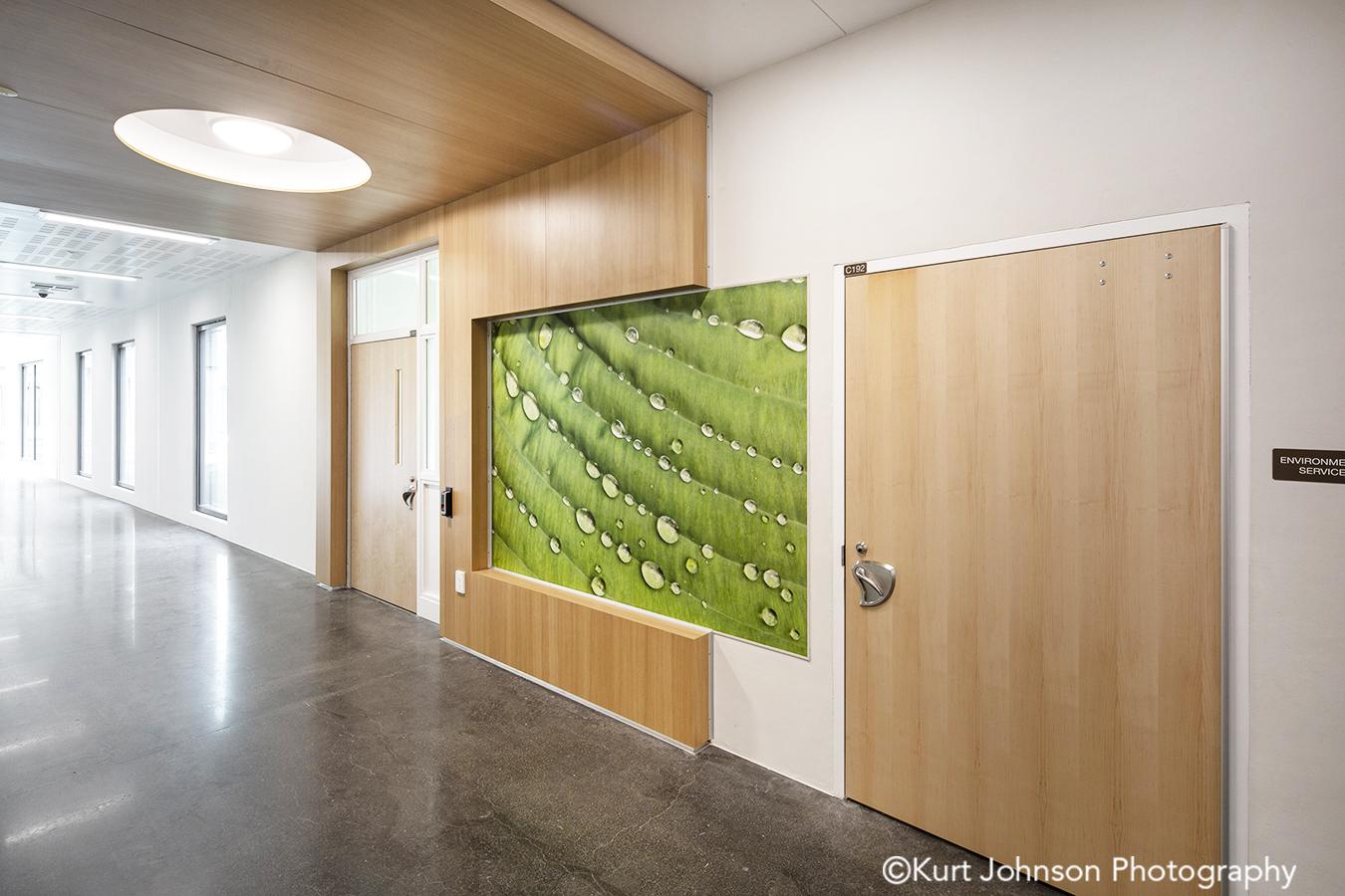 fulton state hospital missouri mo behavioral health Koroseal fusion wall protection green leaf leaves water corridor hallway wayfinding art install installation
