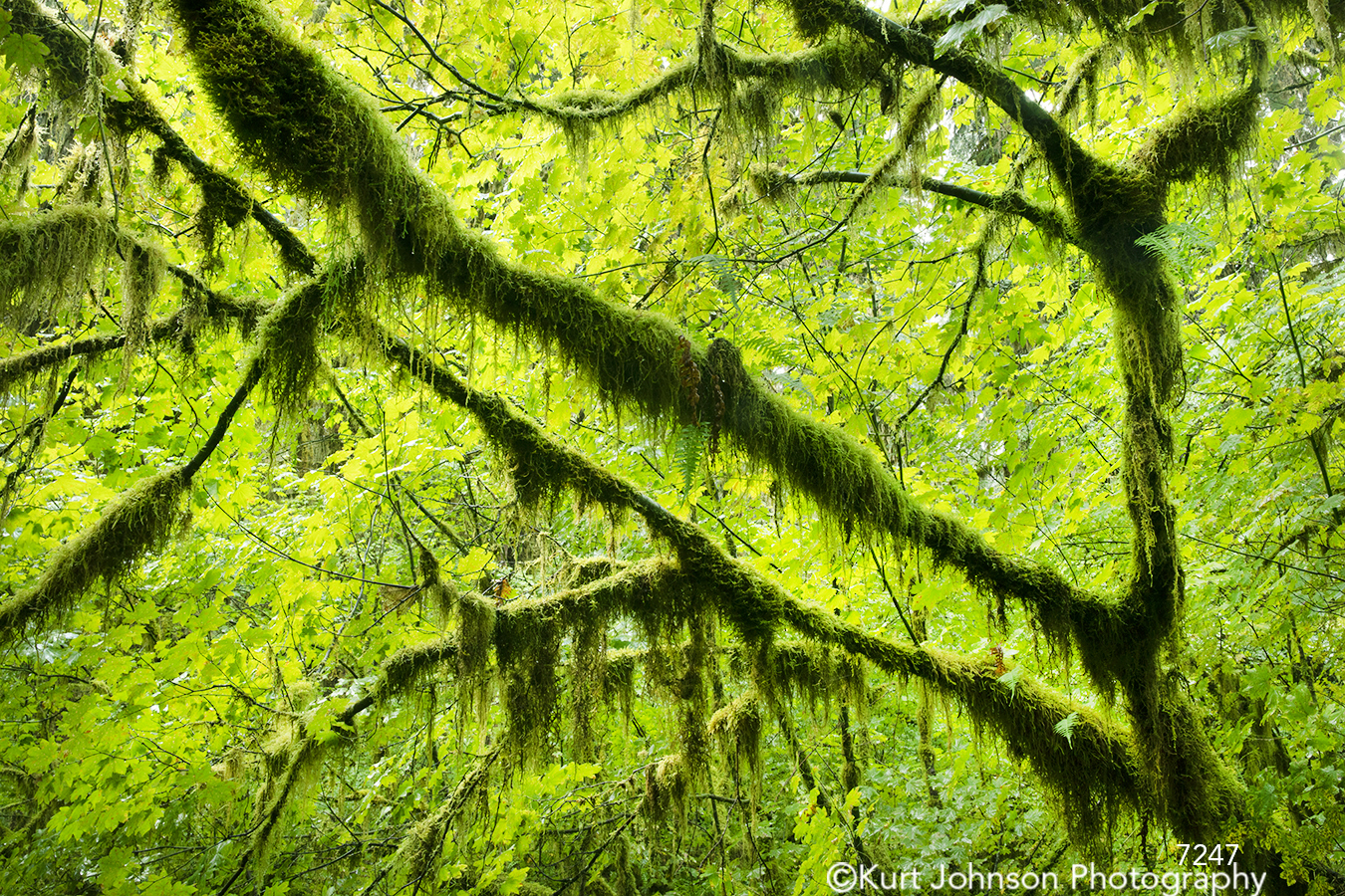 green tree trees branches moss forest rainforest healing nature
