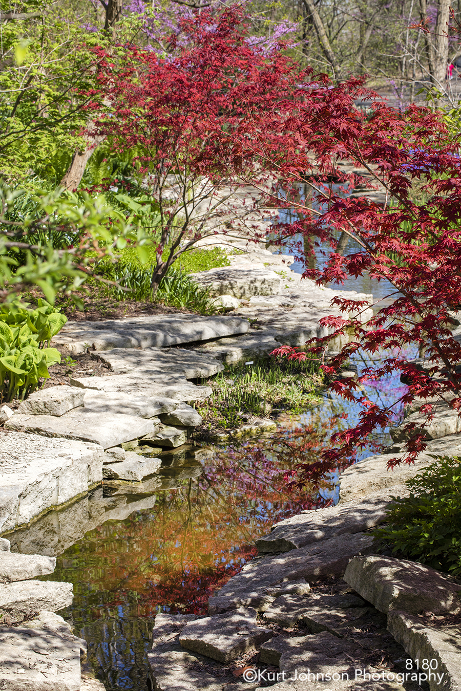 calm still water river stream path rocks red tree green reflection waterscape