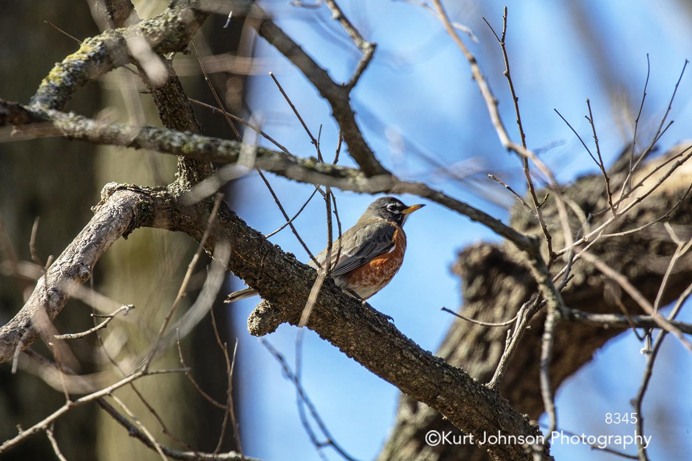black orange bird tree branches blue sky nature cute children children's art animal wildlife