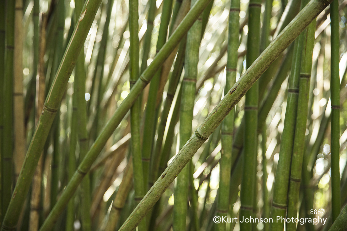 tall green grass bamboo lines pattern close up detail