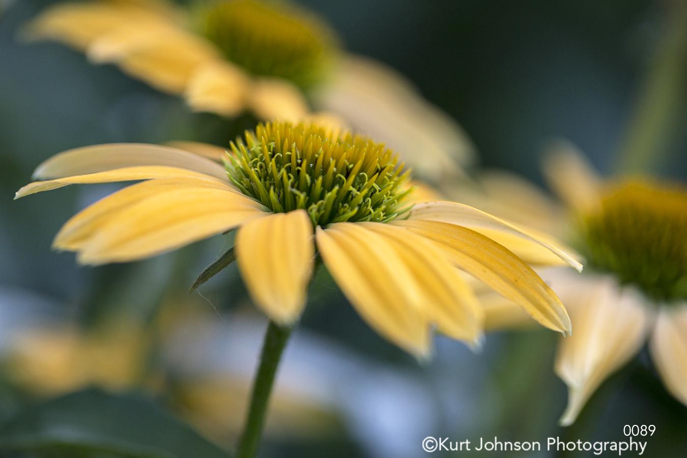 yellow flower stem flowers bloom close up detail macro field