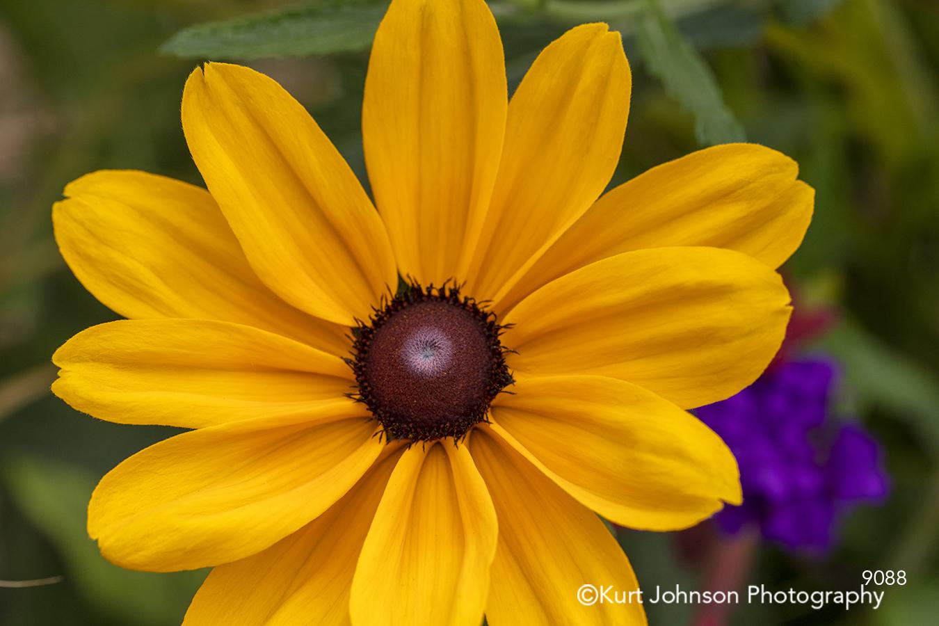 yellow flower detail close up petal petals modern bright happy