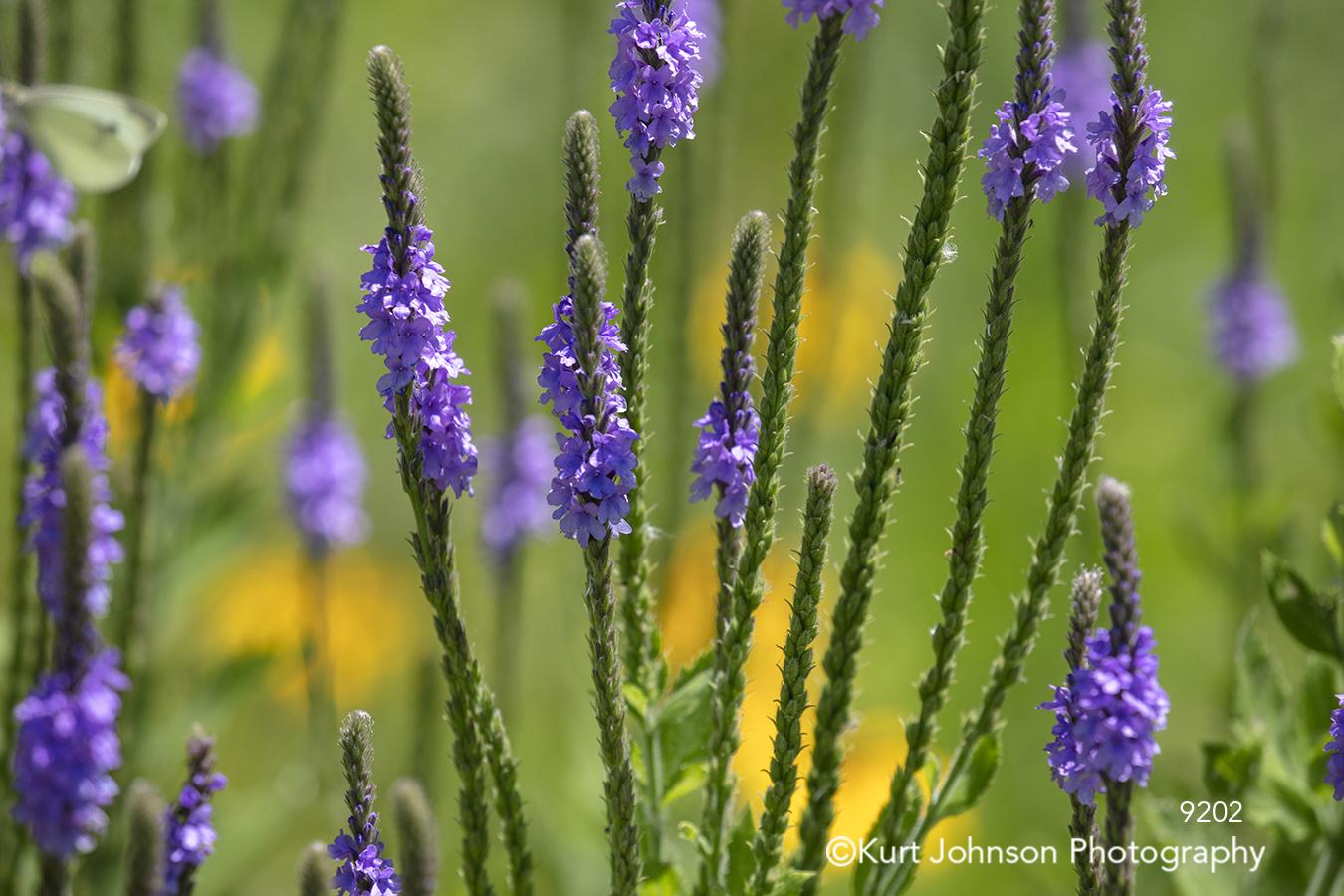 purple flowers pattern lines close up detail macro flower botanical green grass field