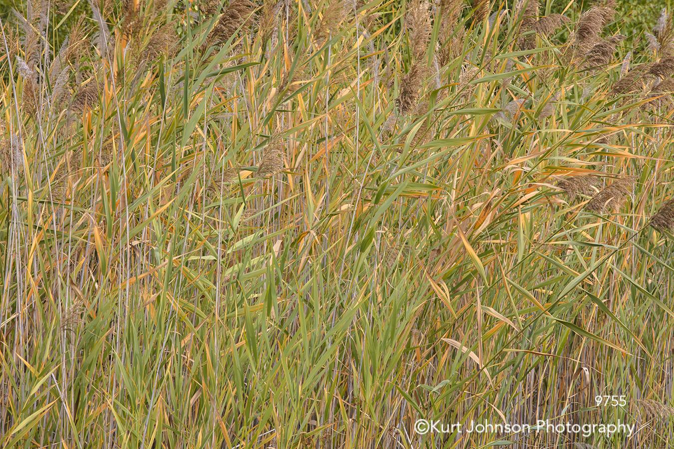 green yellow brown grass blades field grasses
