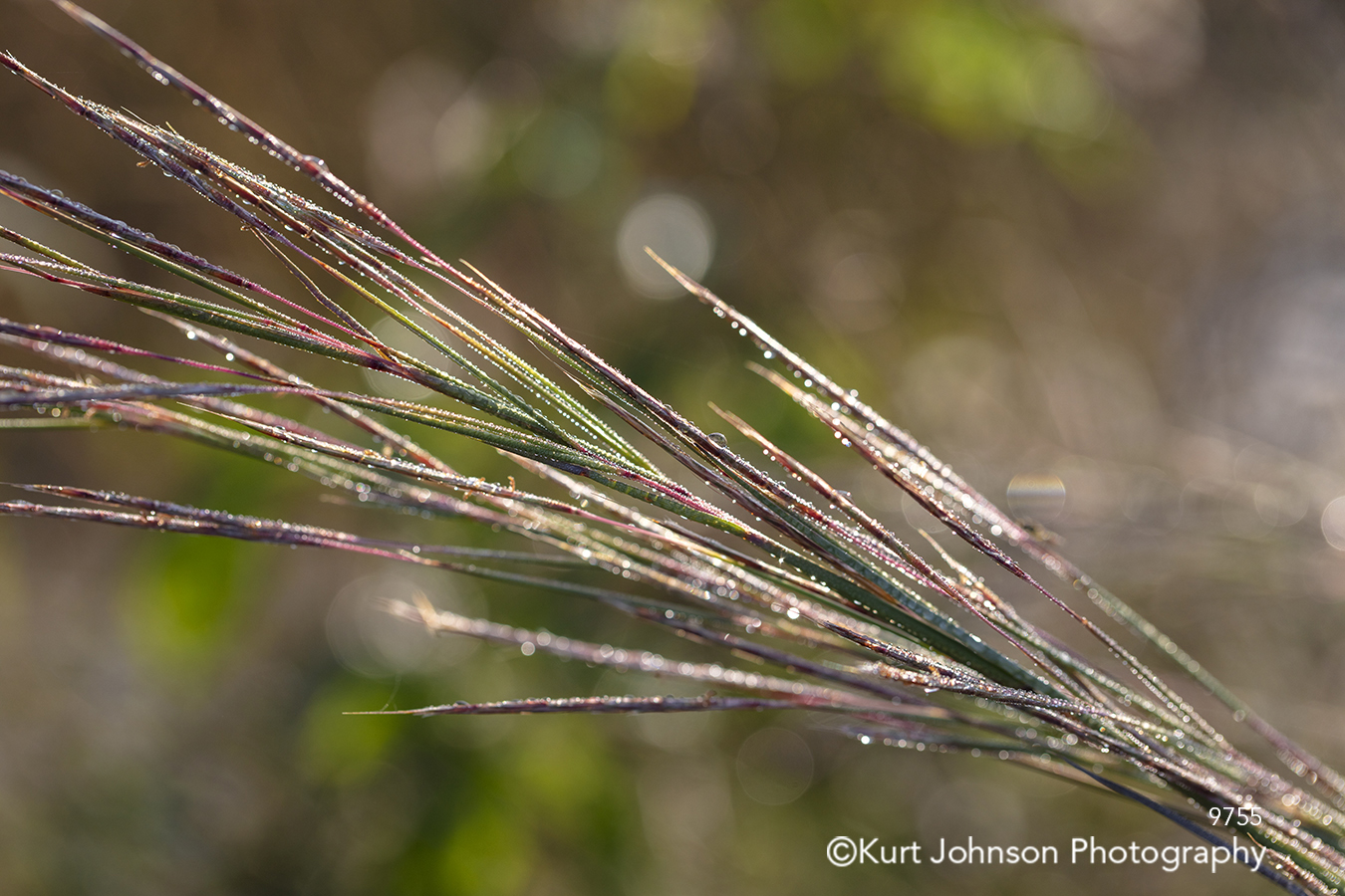 green brown red grass grasses close up detail macro