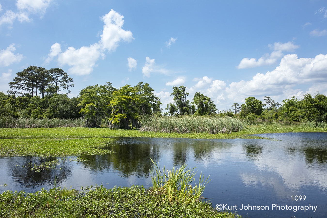 water waterscape green grass tree trees reflection blue sky clouds south southeast