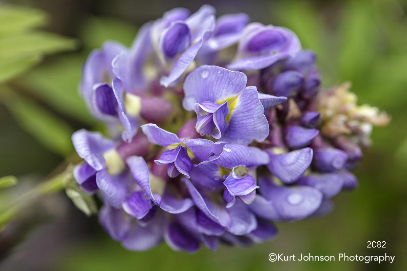 purple violet lavender flower petals close up macro detail flowers water drops dew