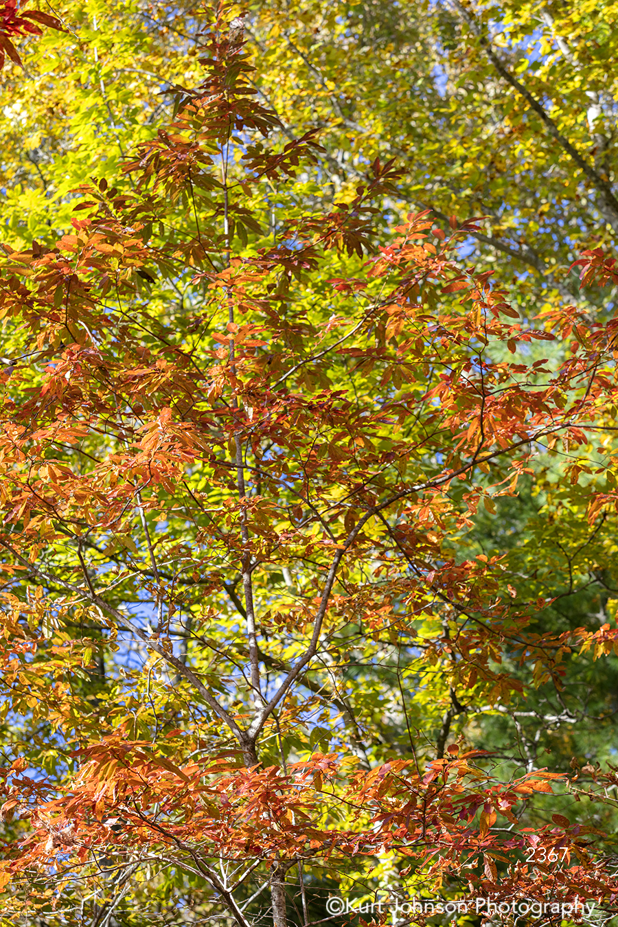 orange green tree trees leaves autumn fall forest