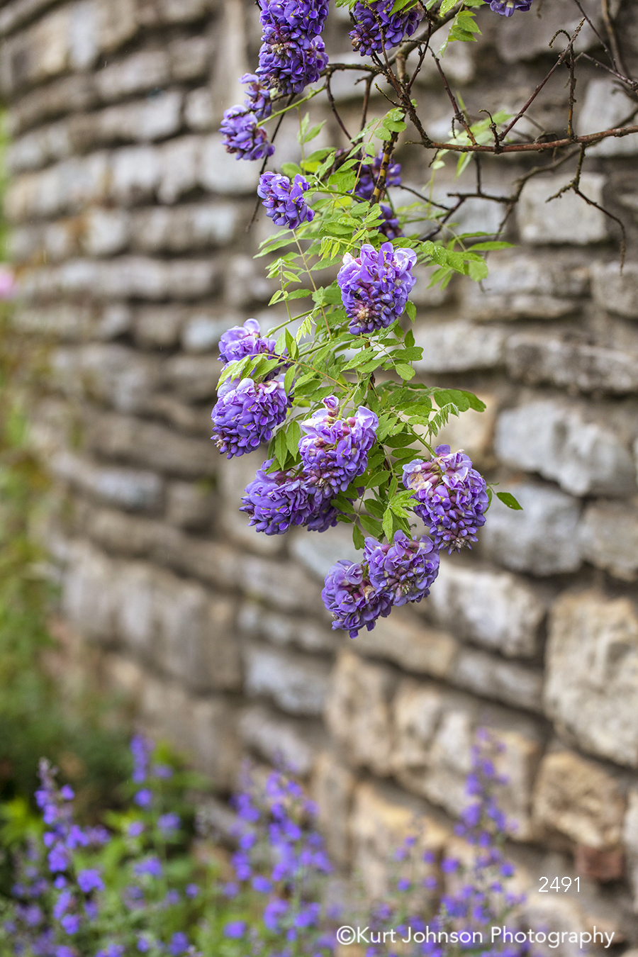 south southeast purple lavender flowers vine green leaves brick stone wall