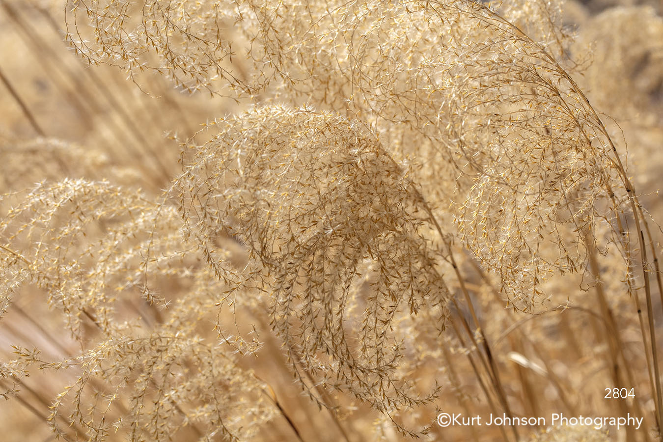 brown gold grass grasses lines pattern texture textures