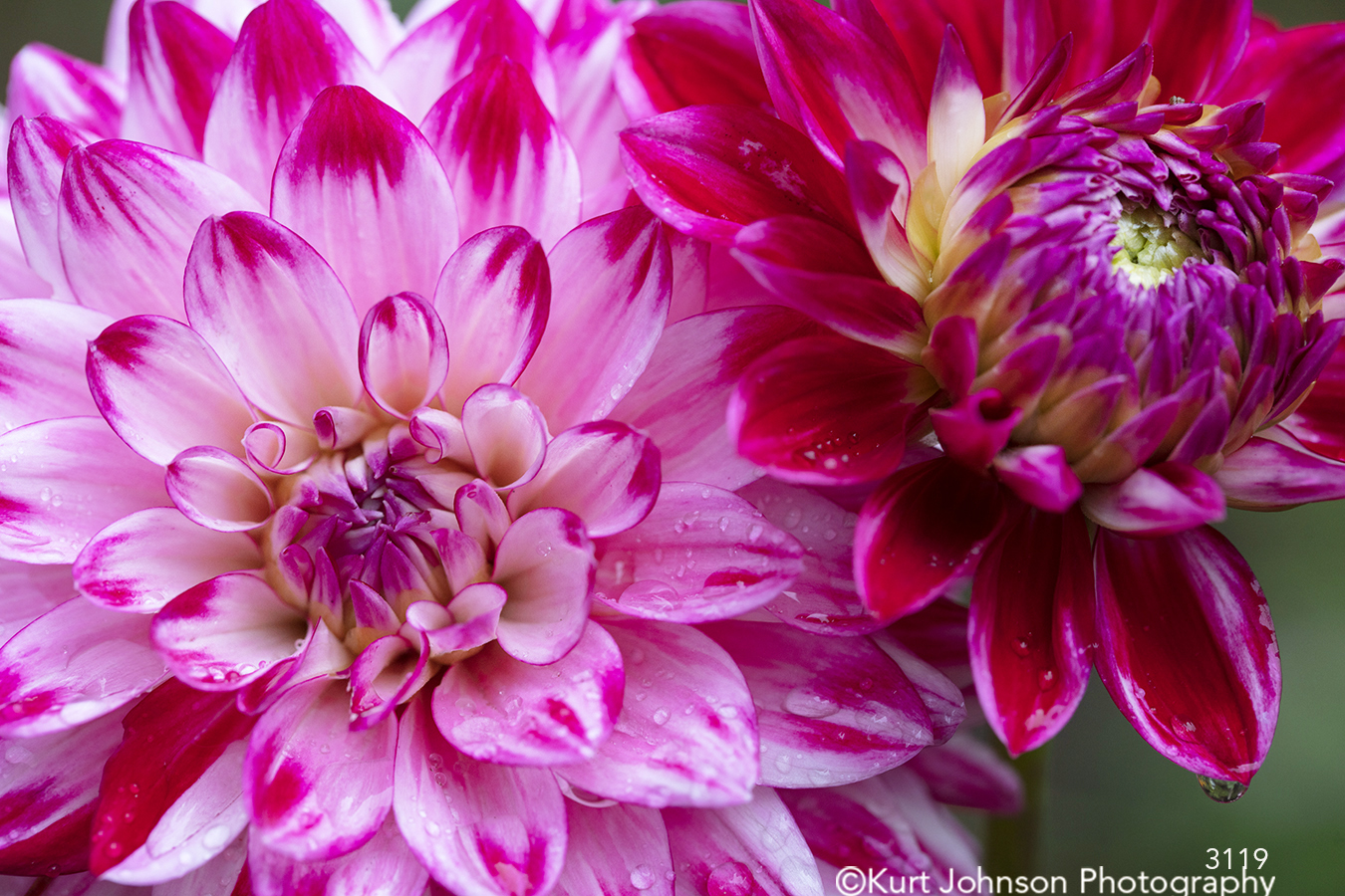 pink flowers flower petals close up detail bright happy macro colorful contemporary