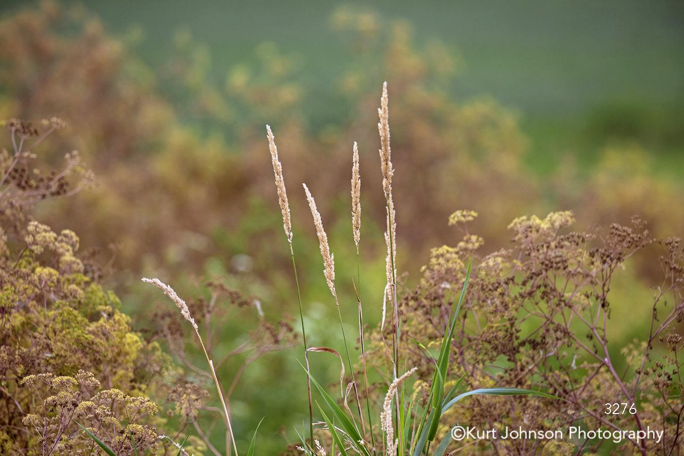 green brown gold grass grasses field macro closeup detail midwest