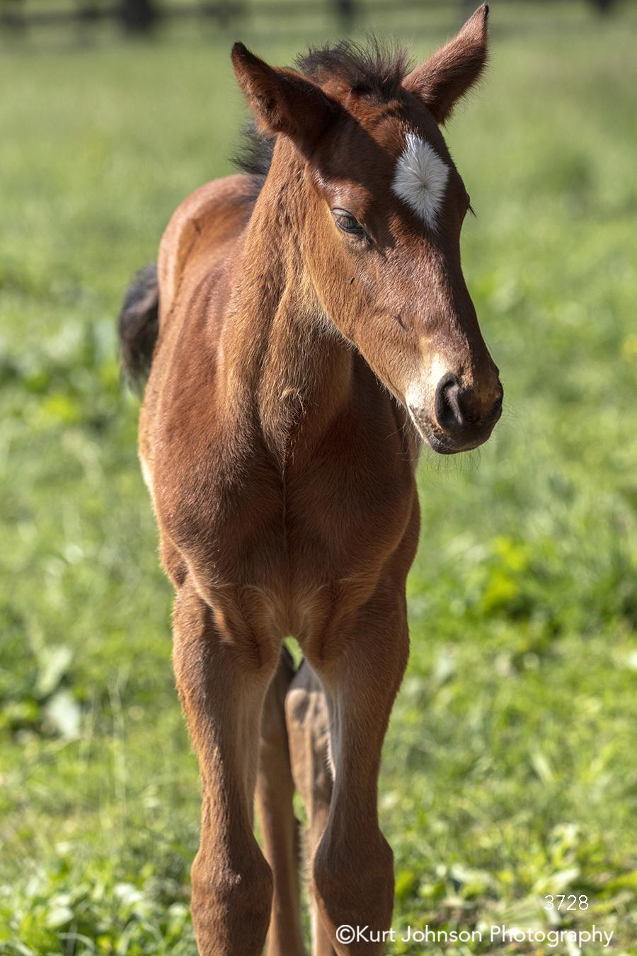 horse pony animal wildlife south southeast kentucky children's art children