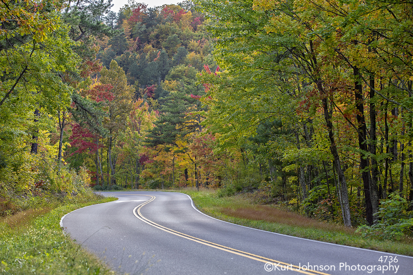green red yellow orange autumn fall tree trees leaves landscape path road travel journey woods forest