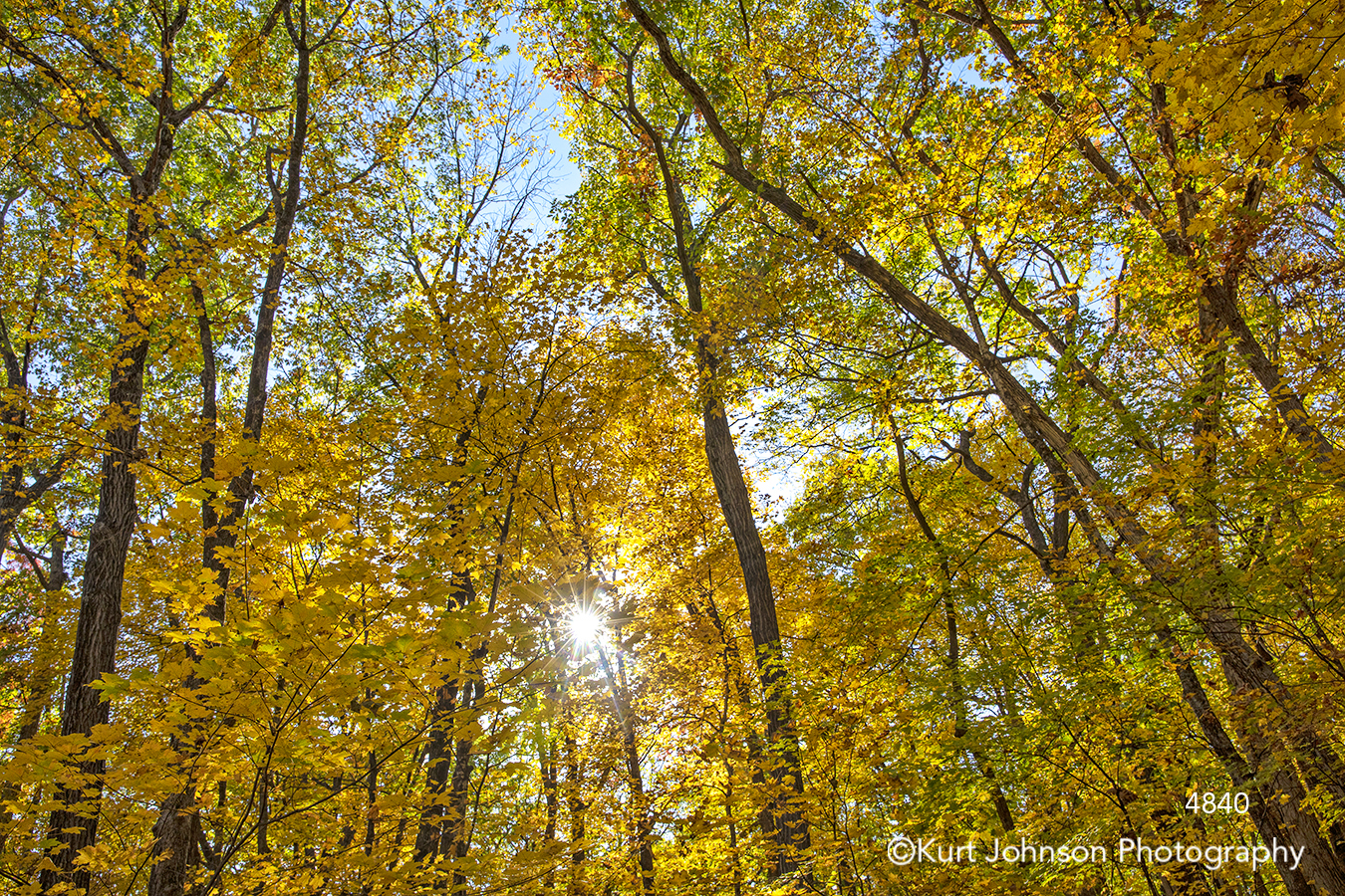 yellow autumn fall leaves branches forest sun tree trees woods