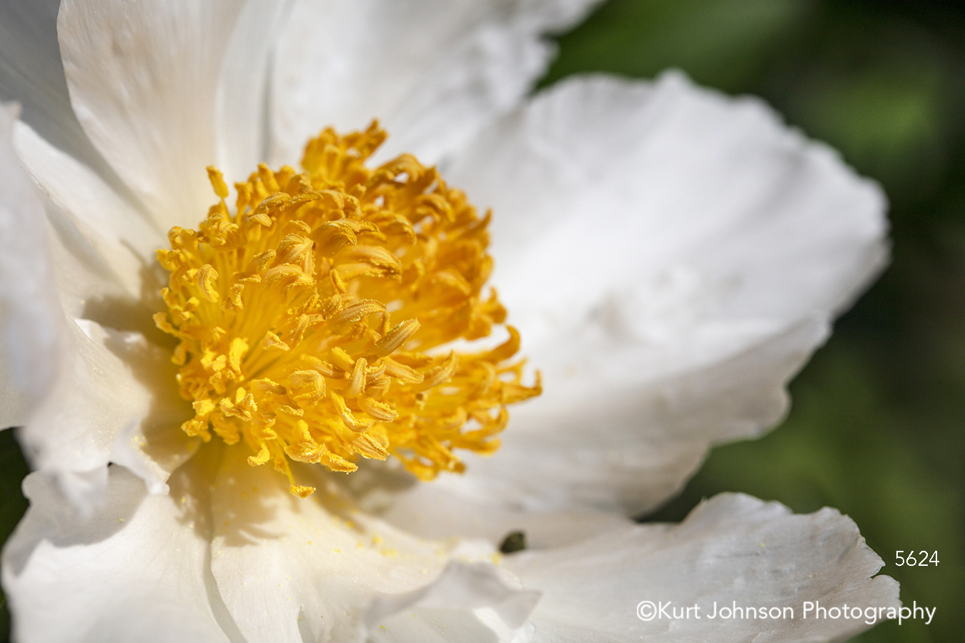 white yellow flower close up macro detail contemporary flowers petal petals