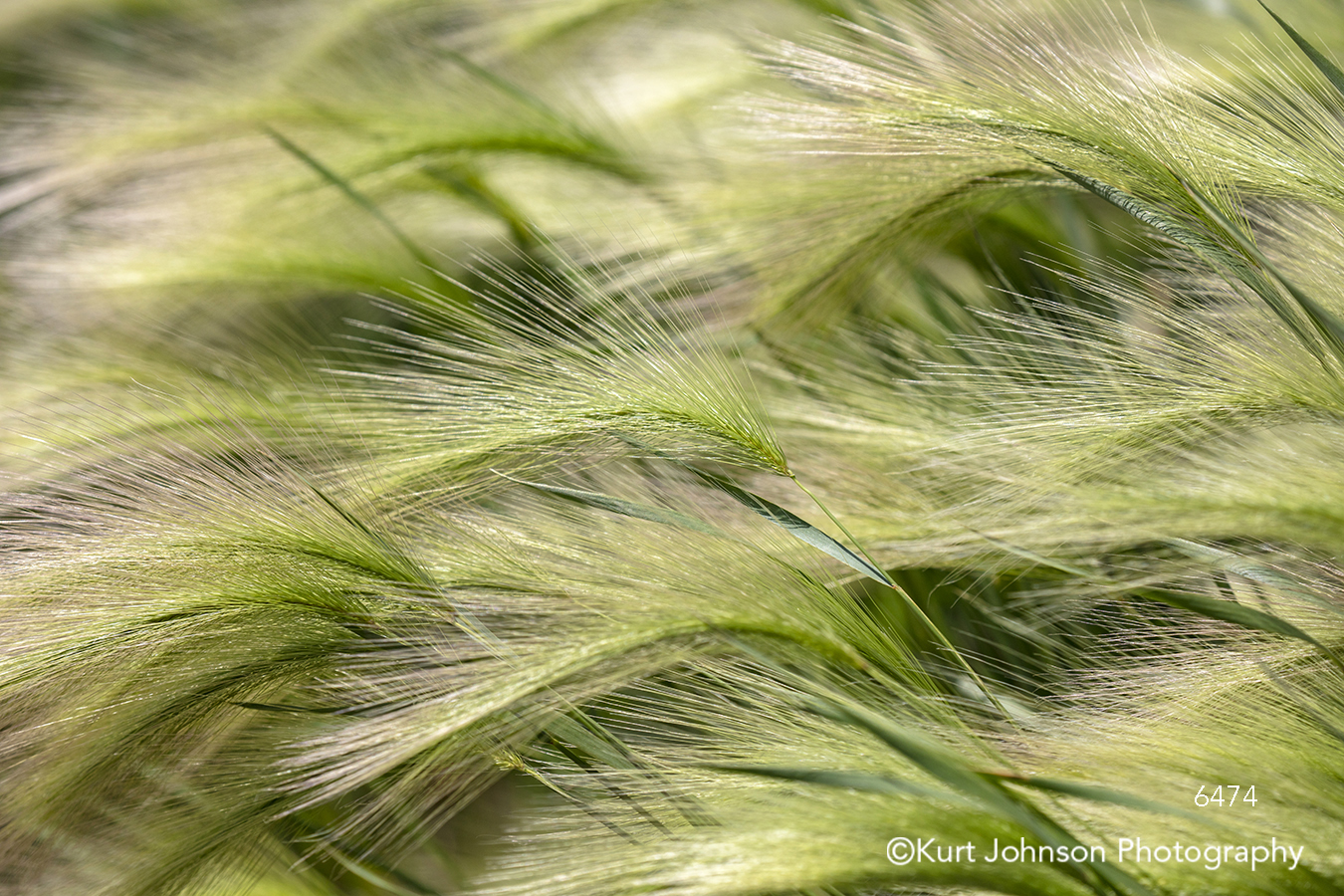 green grass grasses wind lines pattern texture soft detail macro close up