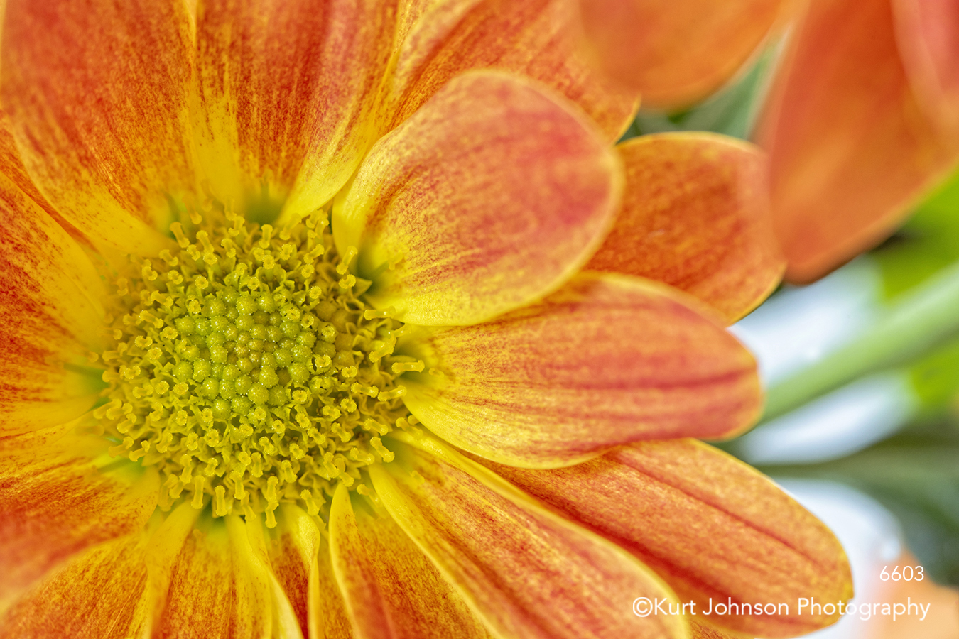 orange yellow flower bright happy flowers close up detail colorful petals macro