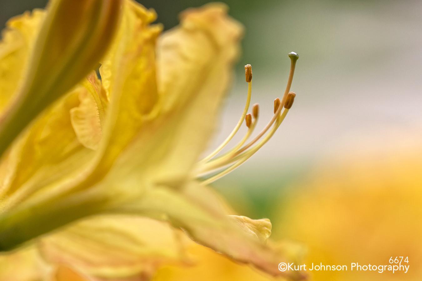 yellow orange flower closeup macro detail contemporary stamen flowers