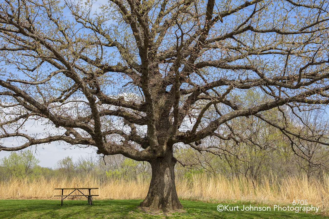 large tree branches bench trees landscape blue sky green grass clouds