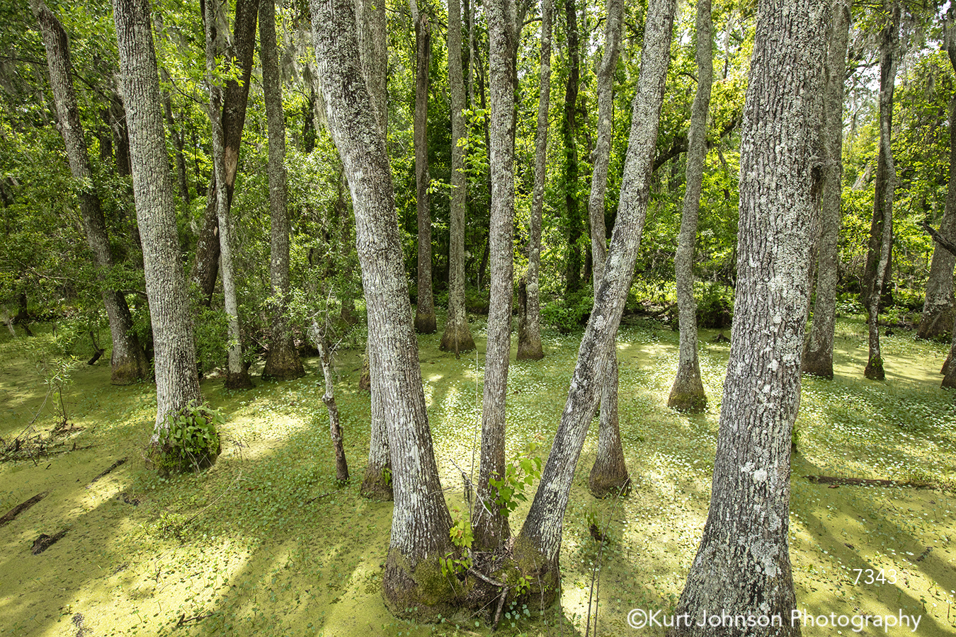 green tall tree trees branches forest healing nature healthcare south southeast