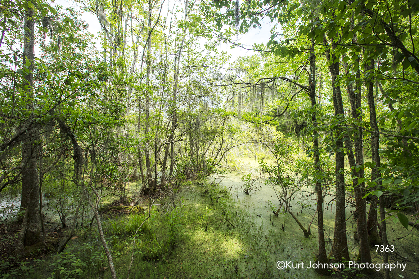 green tree trees tall branches forest water waterscape landscape south southeast