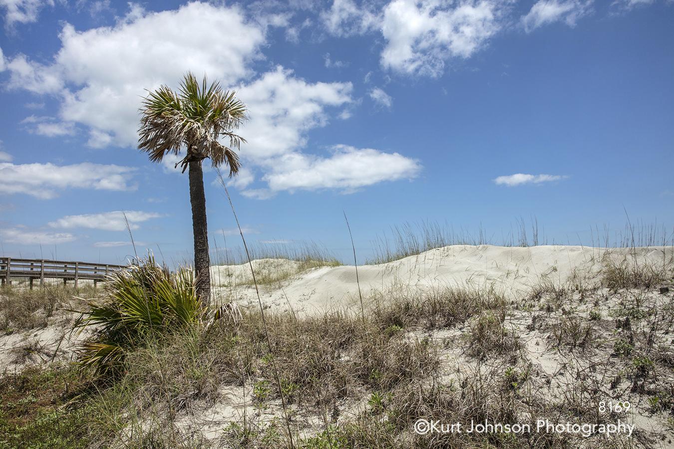 south southeast tree beach shore ocean blue sky clouds landscape