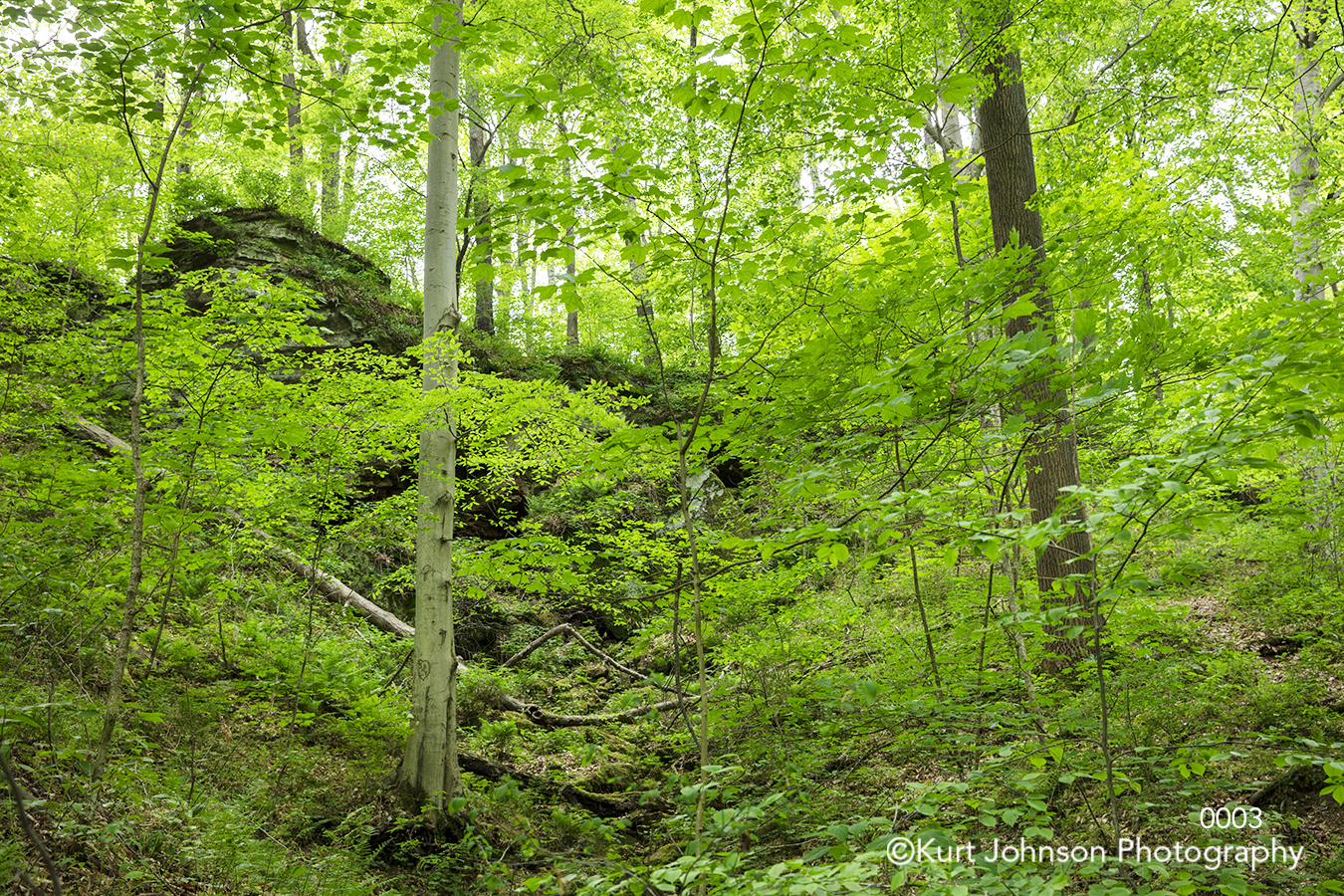 green tree trees forest leaves branches forest landscape hill