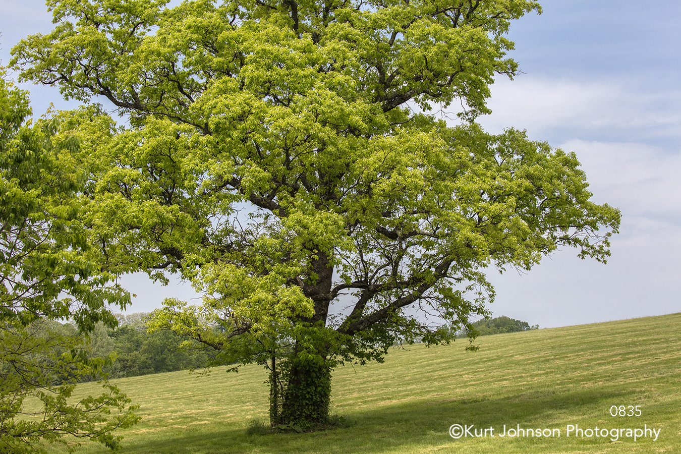 green tree blue sky green grass landscape leaves branches midwest