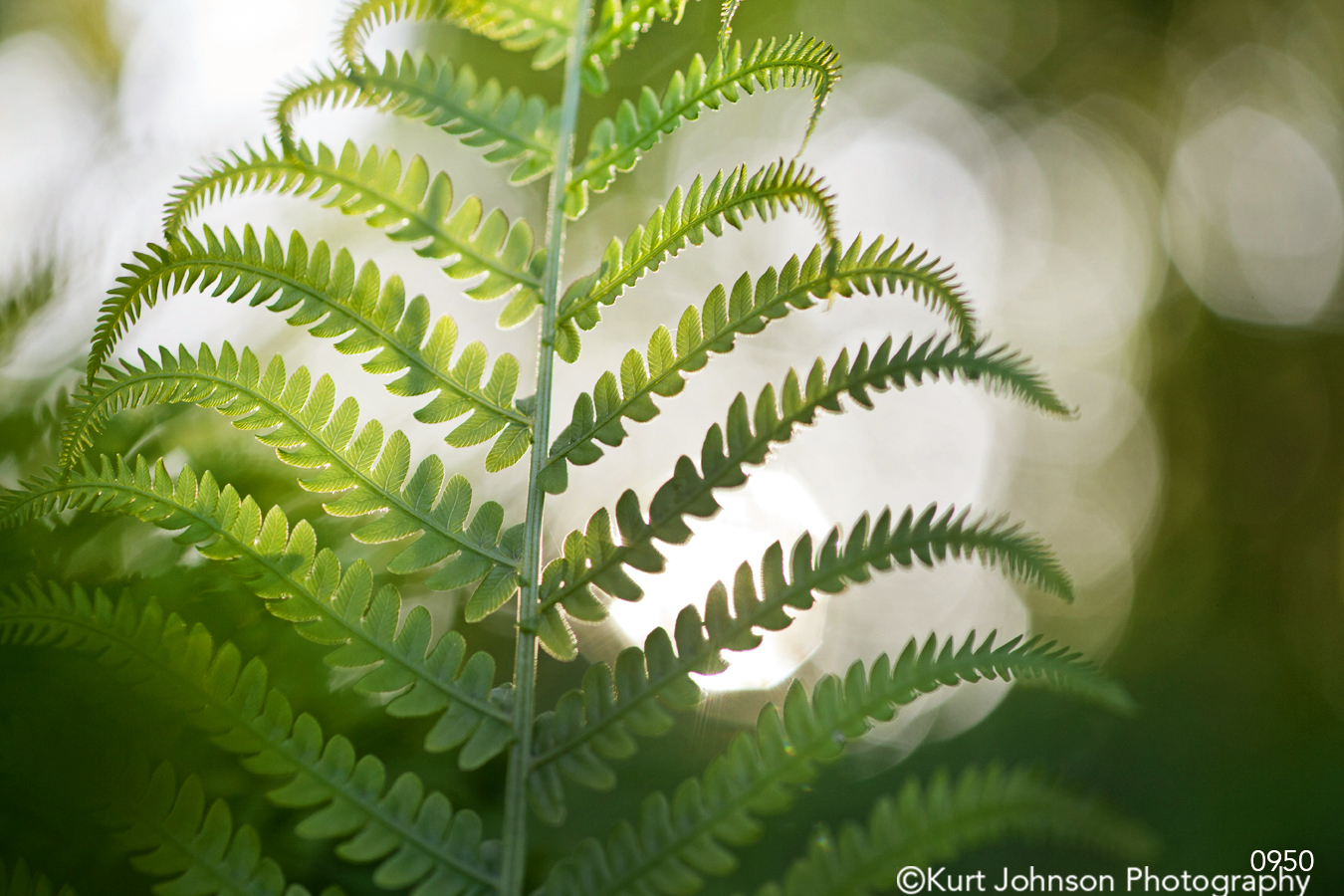 green leaf leaves fern sun sunflare shadows close up detail macro forest