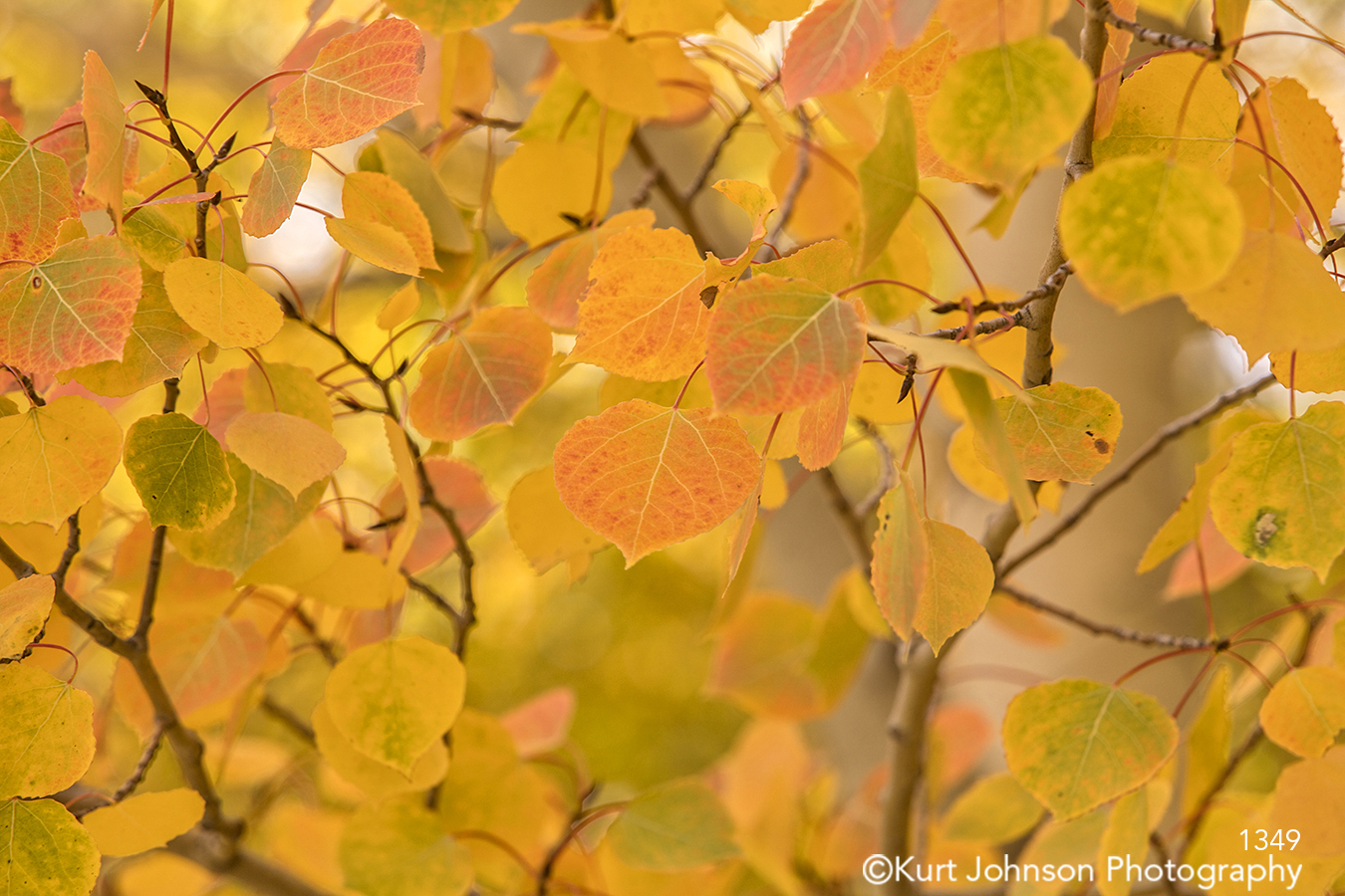 orange yellow autumn fall leaves close up detail branches trees