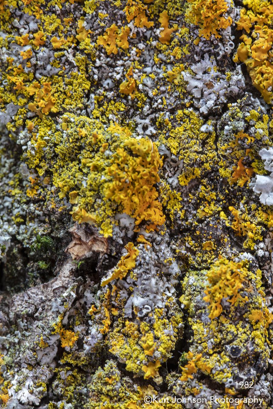 yellow gray green tree bark moss close up pattern texture detail close up
